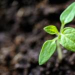 Nachhaltiges Recruiting: Besetzungserfolg langfristig sichern
